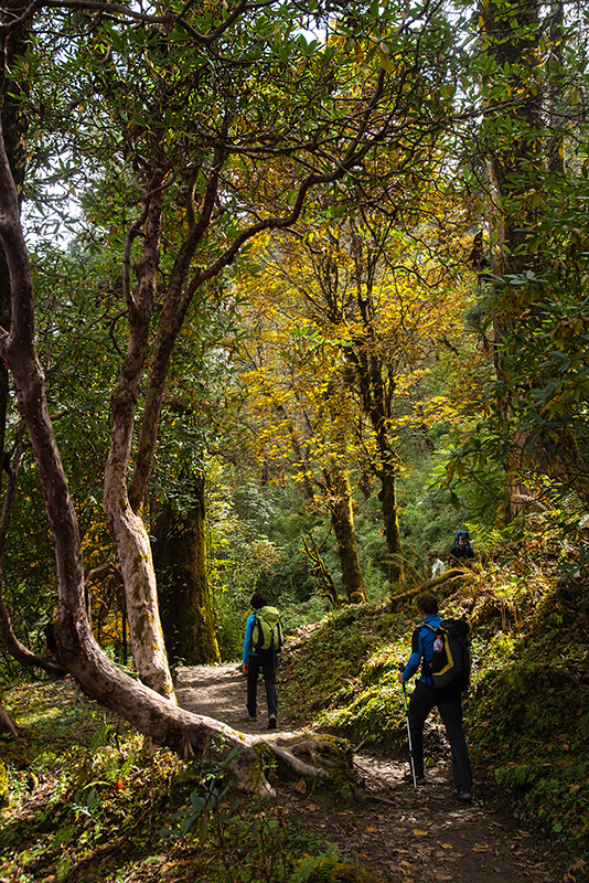 Ghorapani - Poon Hill - Tadapani 31-10-17