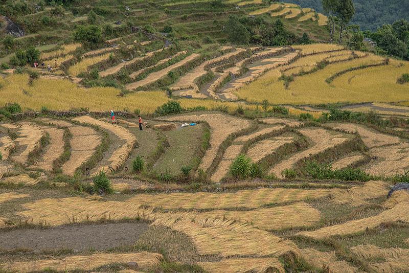 Tadapani-Kimché-Pokhara