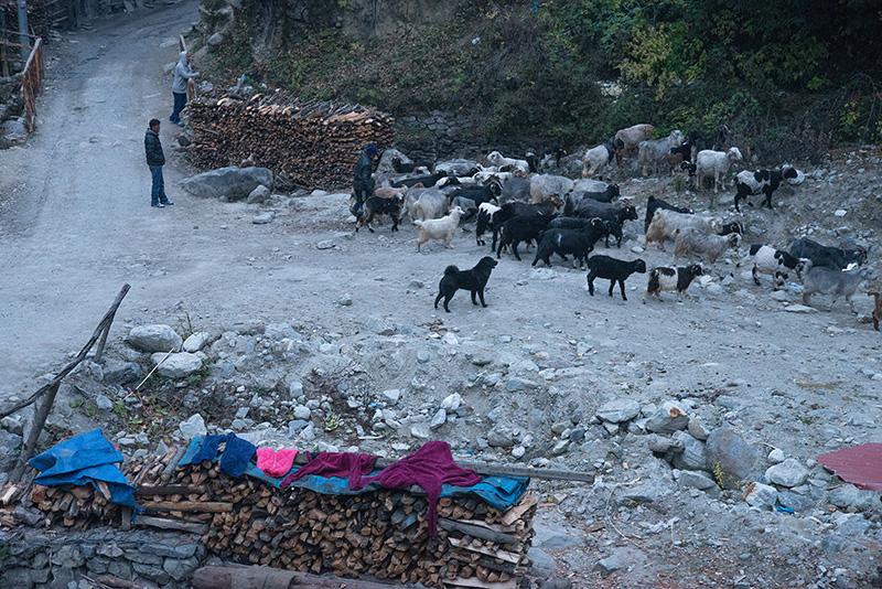 Nepal 18-11-18 Kathmandu-Bhulbhule-Chame