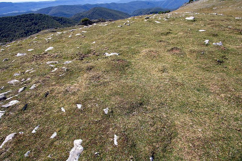 Muñozabala - Arraska 1-9-20
