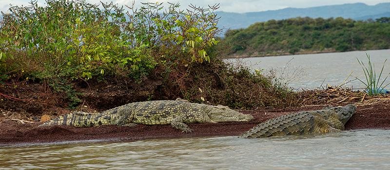 Etiopía: Lago Chamo-Jinka
