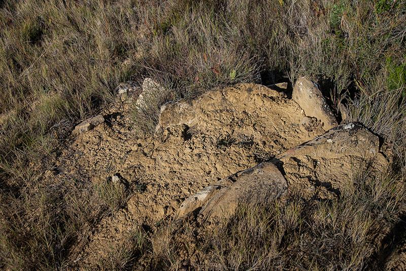 Mendigorria: Andelos y restos 11 y 16-10-20